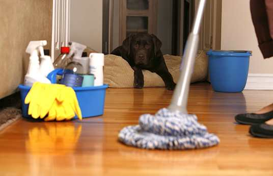 House or Residential and Apartment Cleaning Services in Gurgaon ...